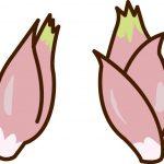 ミョウガをプランター栽培したい!ミョウガの育て方